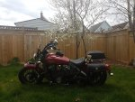 Indian scout in back yard.jpg